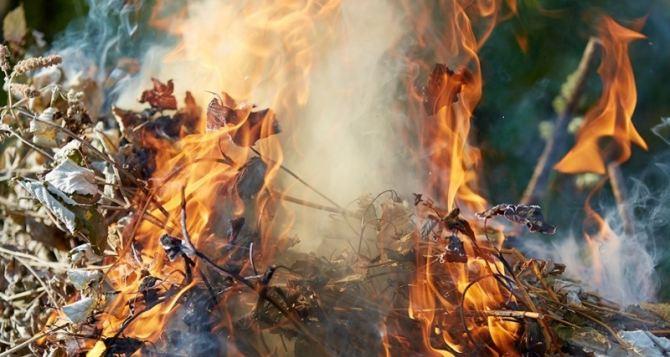 Жителей Луганска призывают не сжигать сухую траву и ветки