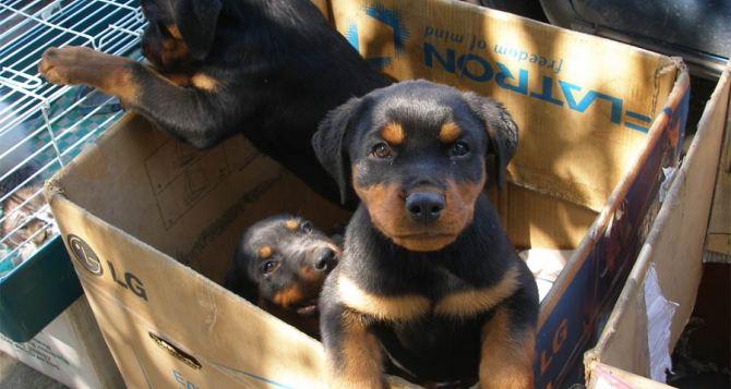 В Луганске разрешили продавать животных на улице Челюскинцев