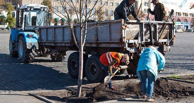 В центре Харькова высаживают липы