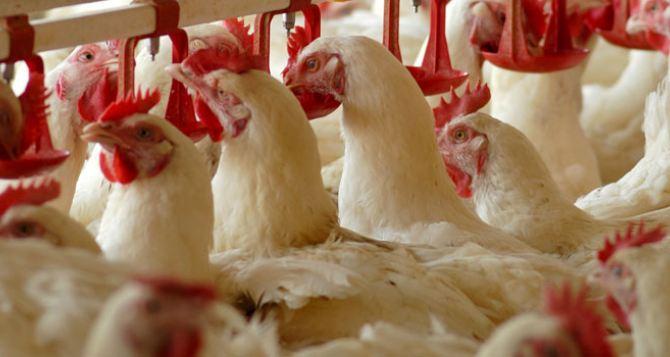В Перевальском районе планируют запустить в работу птицефабрику