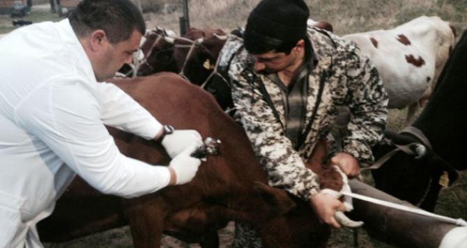 В Луганске в мае-июне проведут диспансеризацию животных