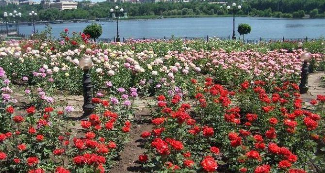 В Донецке высадили два миллиона роз