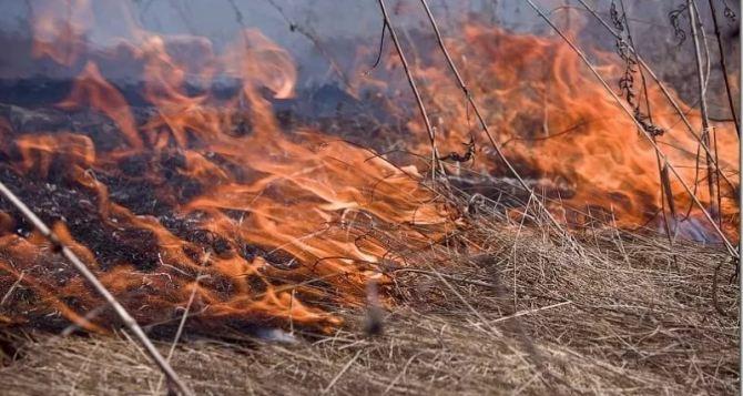 Жителей Луганска простят соблюдать меры безопасности в пожароопасный период