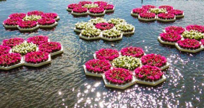 В Харькове появились необычные цветочные клумбы