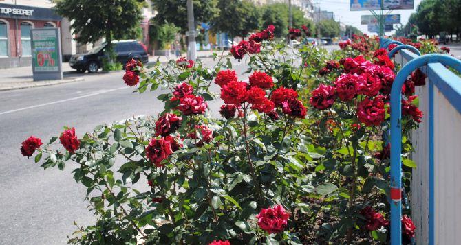 В Луганске высадили почти 100 тысяч цветов