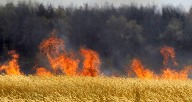 В самопровозглашенной ЛНР с 1июля объявлен высокий класс пожарной опасности