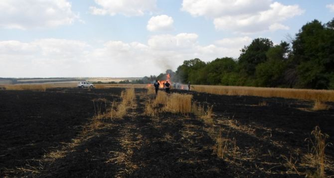 В Донецкой области из-за обстрела сгорело 60 га пшеницы (фото)