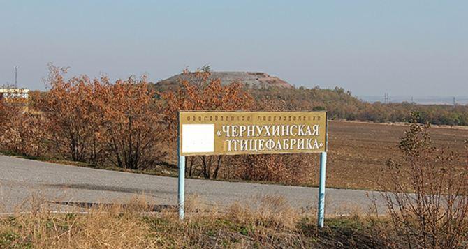 ЛНР ввела временную администрацию на Чернухинской птицефабрике
