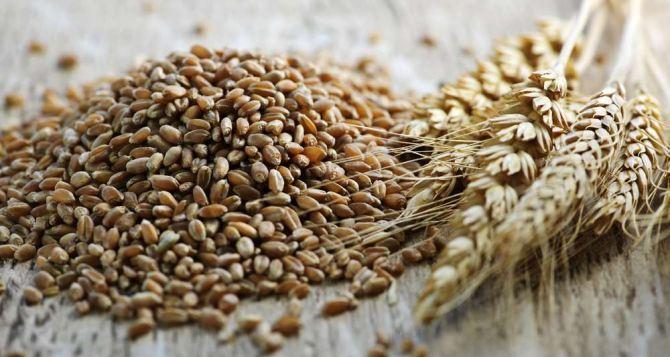 На элеваторы самопровозглашенной ЛНР поступило 29 тыс. тонн зерна