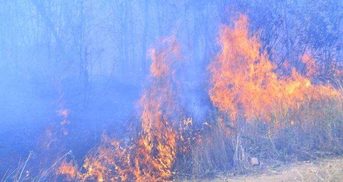В Лутугинском районе от пожара пострадали жилые дома, хозпостройки и опоры ЛЭП (фото)