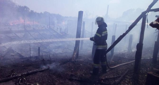 ВЛуганской области в итоге обстрелов зажегся лес
