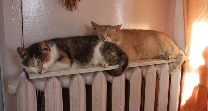 В Алчевске из-за похолодания срочно начали подавать тепло в дома