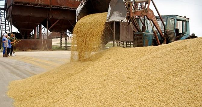 В самопровозглашенной ЛНР установлены льготы на вывоз продовольственной пшеницы
