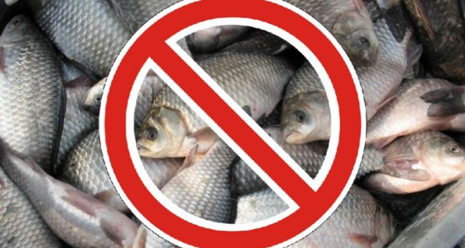 запрет на ловлю рыбы в киеве