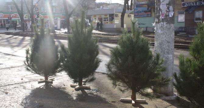 Новогодняя елка обойдется луганчанам от 300 рублей