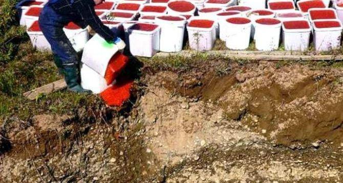 В Луганске уничтожили 85кг лососевой икры