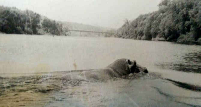 Бегемот жил в водах Северского Донца между Лисичанском и Северодонецком (ФОТО)