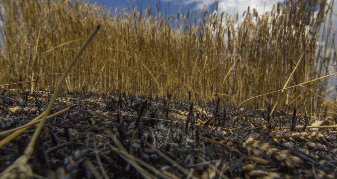 С 1июля на Донбассе планируются «урожайное» перемирие. Что нужно для его реального соблюдения,— мнение