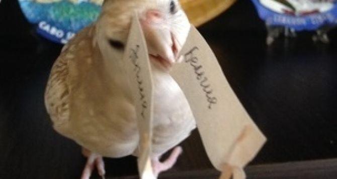 Бельгия сегодня выиграет- пророчество луганского попугая