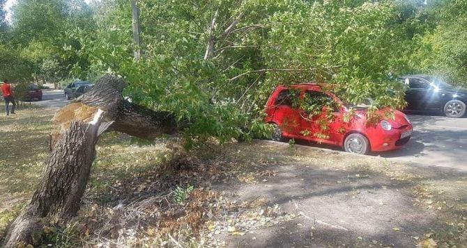Дерево упало на легковой автомобиль в Северодонецке ФОТО