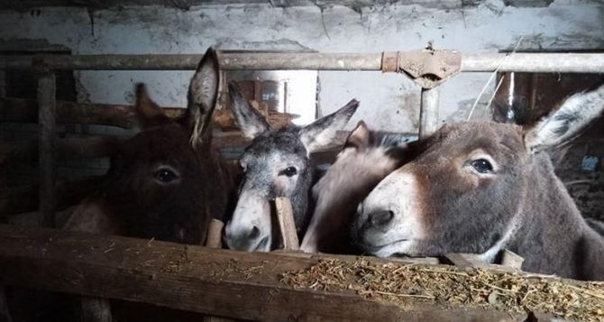 Переселенка из Луганска присматривает за ослами из Винницы
