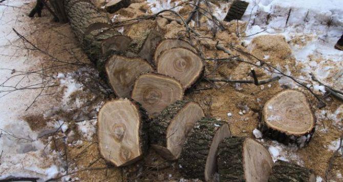 Коммунальщики продолжают вывоз веток после обрезки аварийных деревьев