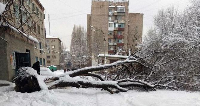 Работа служб Луганска по расчистке снега и по вывозу мусора признана неудовлетворительной. Пасечник отчитал Пилавова.