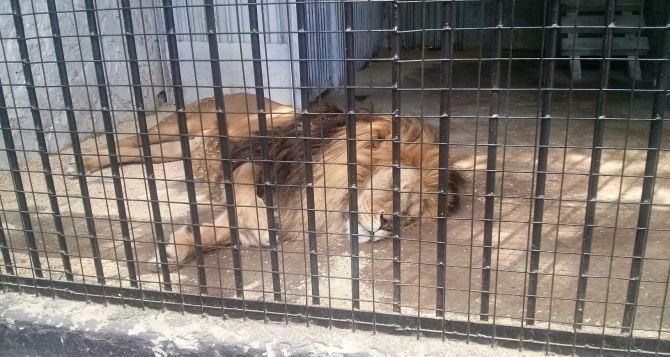 Луганчанин поделился впечатлениями от посещения зоопарка в Парке 1мая. ФОТО