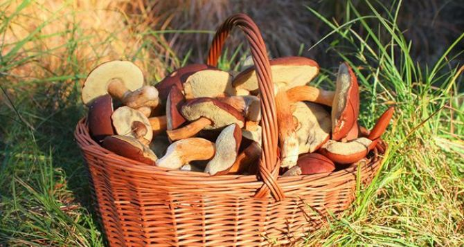 Отравление грибами! Что нужно знать?