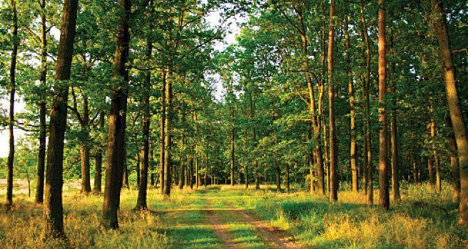 Введено ограничение на пребывание в лесах из-за пожароопасности