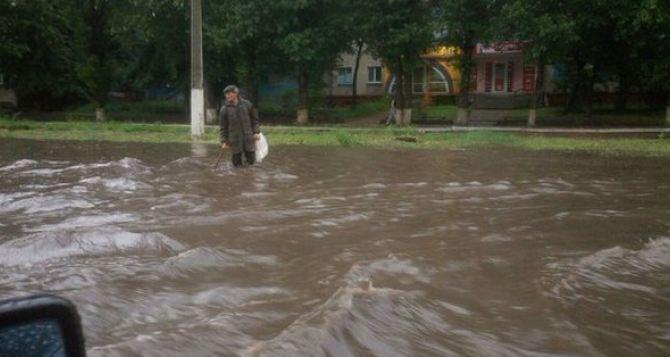 После бури в Луганске упали десятки деревьев, светофор на Советской, кое-где «поплыли» автомобили. ФОТО, ВИДЕО