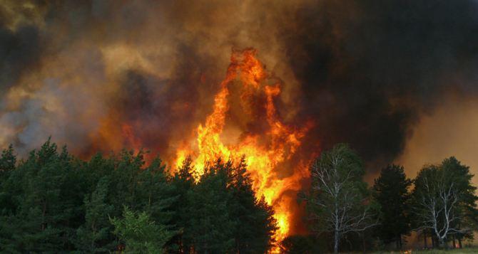 В Станично-Луганском районе горит 20 гектар леса. При тушении трактор подорвался на мине