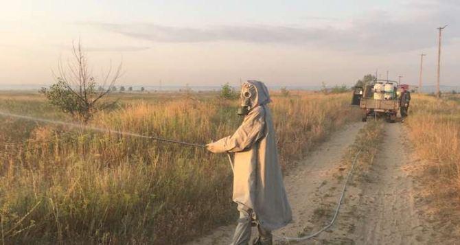В Станице Луганской и Валуйском ввели особый режим защиты растений от саранчи
