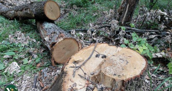 Незаконная вырубка леса в Харьковской области