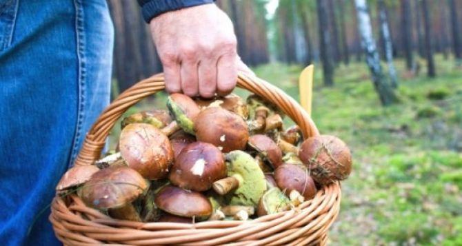 Луганчанам напоминают о мерах профилактики отравления грибами