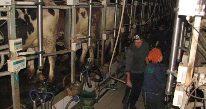 Не смотря на конфликт с местной властью в Троицком районе запустят новый мини-завод по переработке молока