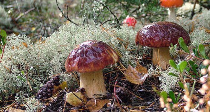 Внимание! Отравление грибами!