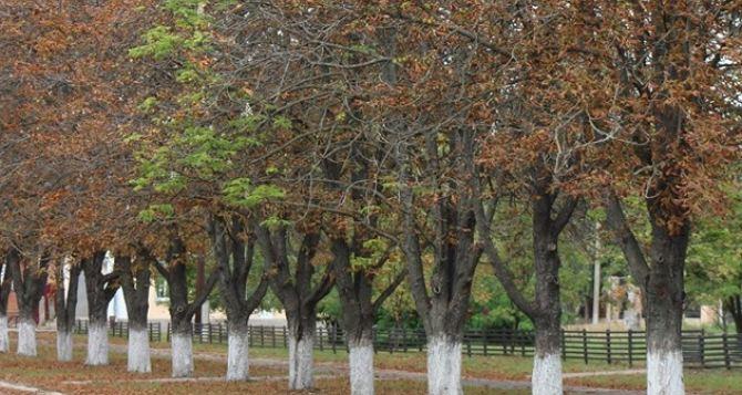 В Новопскове в сентябре зацвели каштаны. ФОТО