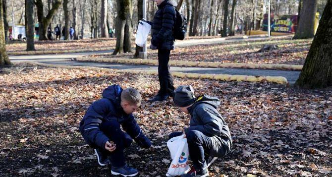 Уже 40 лет собирают желуди школьники из Антрацита для местного лесничества