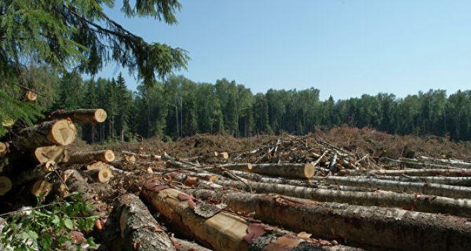 На Луганщине усилят борьбу с «черными лесорубами»