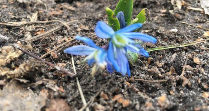 На Луганщине в январе зацвели цветы