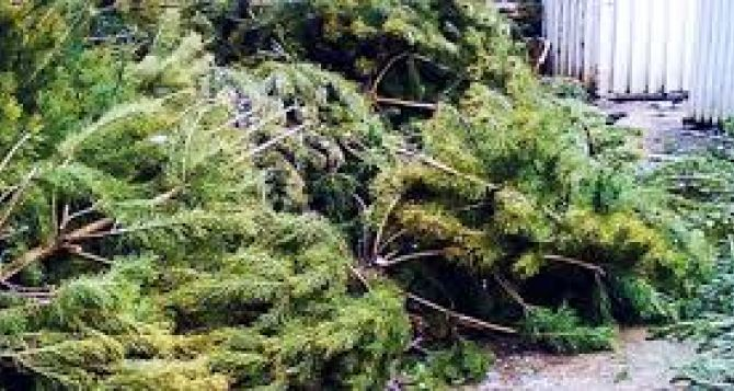 Как правильно выкинуть новогоднюю елку в Луганске
