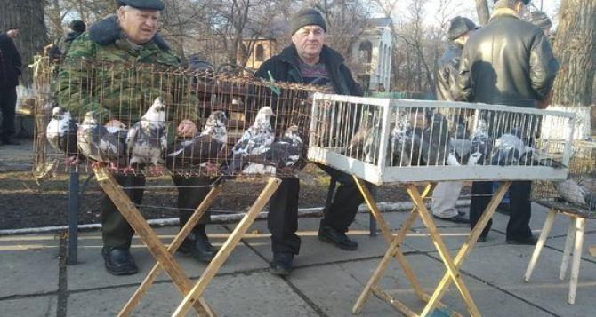 В Луганске в Парке имени 1мая состоялась традиционная выставка птиц. ФОТО