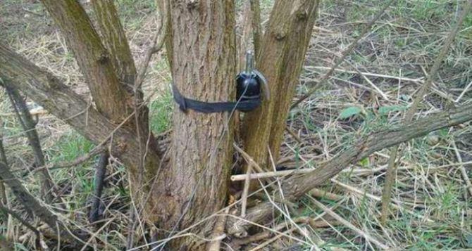 Жители Луганска подорвались в лесополосе у Северского Донца в районе Николаевки