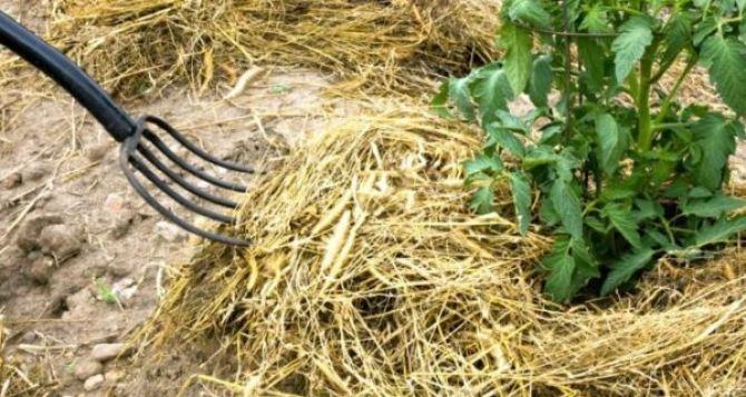 Фермер в Троицком районе выращивает годжи и амарант