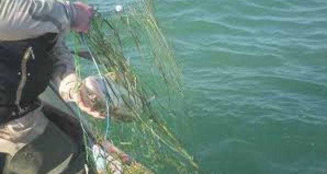 В Азовском море с начала года выявили около 5 км браконьерских сетей