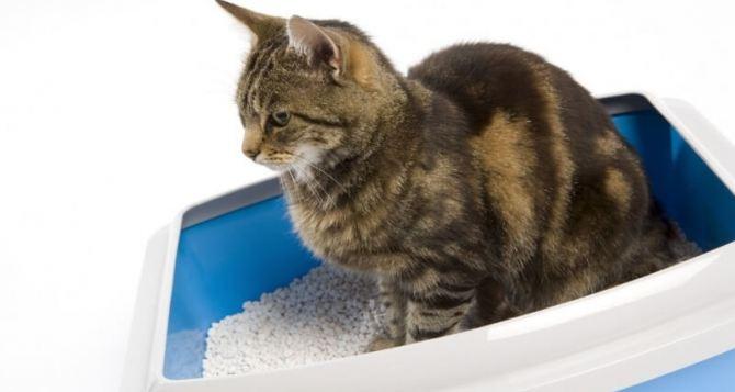 Выбор лотка и наполнителя для кота