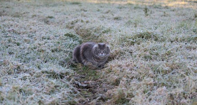 Сегодня ночью и завтра утром в Луганске заморозки