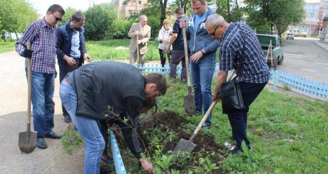 В Алчевске жители посадили 600 саженцев кустарника. ФОТО