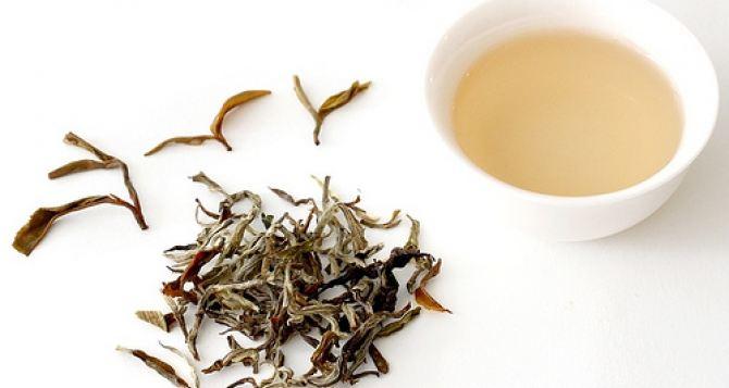 Особенности изготовления белого чая